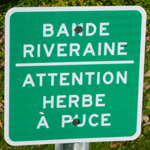 Bande riveraine | Municipalité de Saint-Mathieu